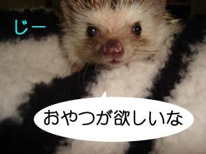 oyatugahosii_300.jpg