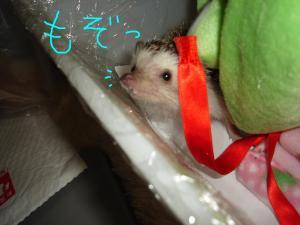 pyokonumozo_300.jpg