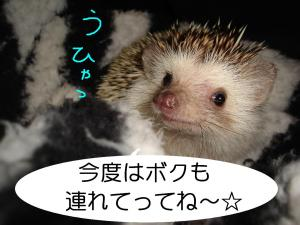 sounanouhya_300.jpg