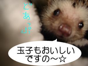 sukinamonodoappu_300.jpg