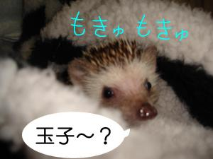 sukinamonotamago_300.jpg