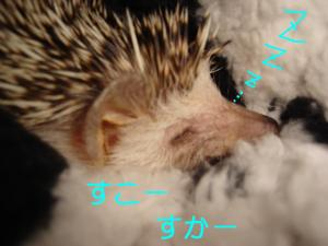 suko-suka-_300.jpg