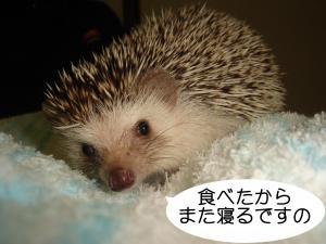 syokugo_300.jpg