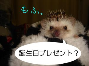 tannzyoubimofu_300.jpg