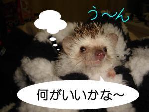 tannzyoubiu-n_300.jpg