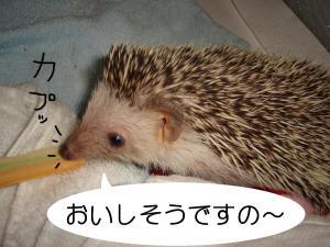 ti-sasakapu_300.jpg