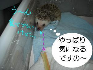 ti-sasayappari_300.jpg