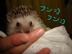 tofukasufunfun_300.jpg
