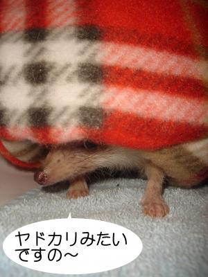 yagokari_300.jpg