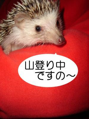 yama_300.jpg