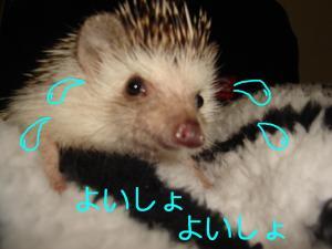 yoisyoyoisyo_300.jpg