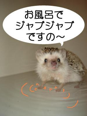 zyabuzyabu_300.jpg