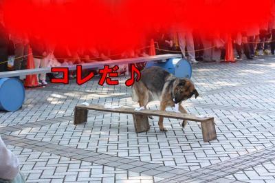 005_20091018020155.jpg