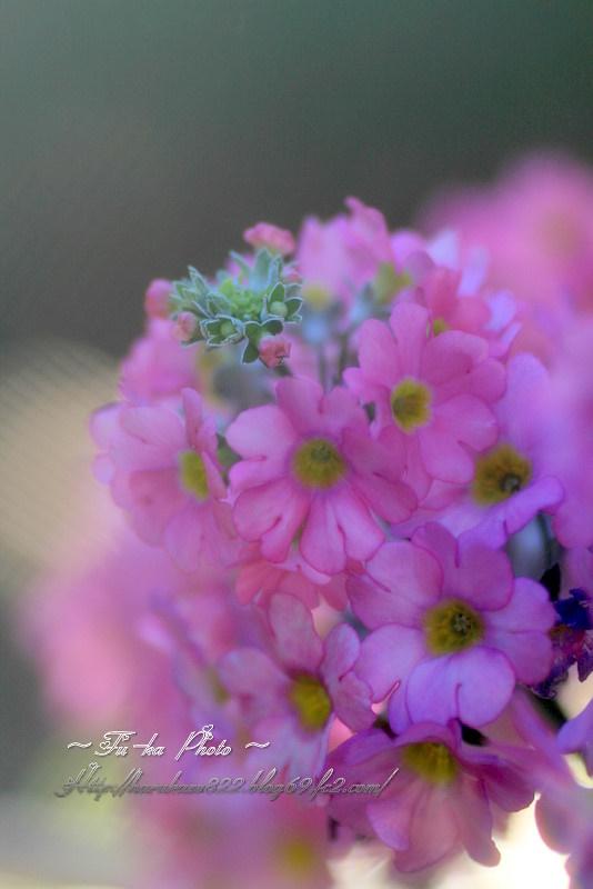 IMG_3650.jpg