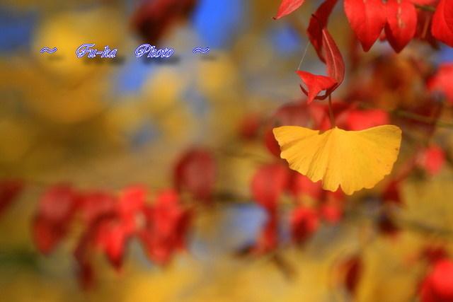 IMG_6752.jpg