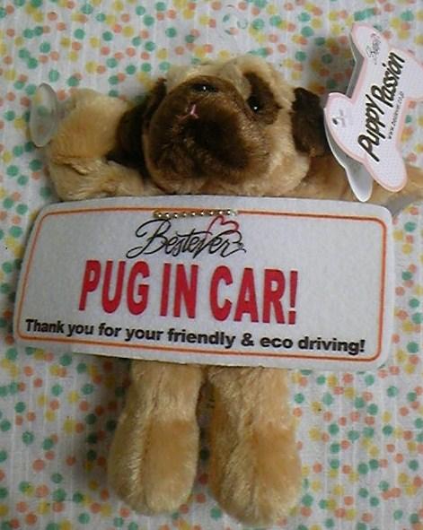 PUG IN CAR