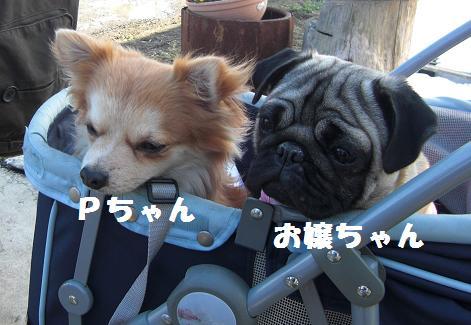 Pちゃん&お嬢ちゃん
