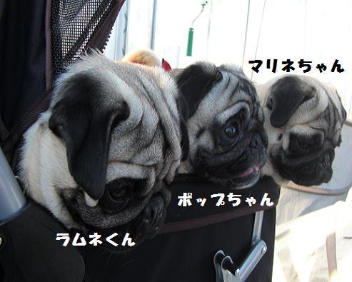 ポップちゃん&マリネちゃん&ラムネくん
