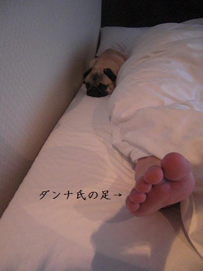 ダンナ氏の足と。
