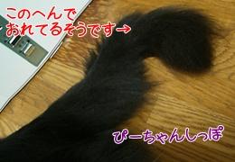 200911078.jpg