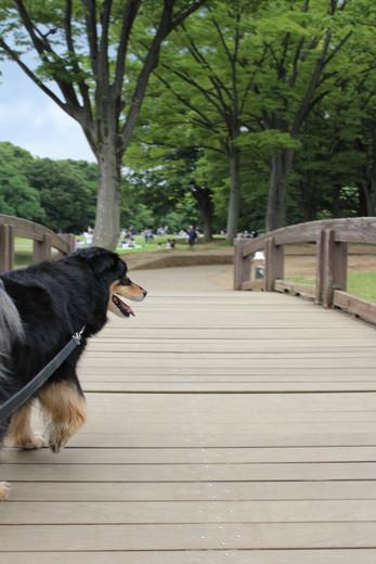 橋を渡りますのん♪