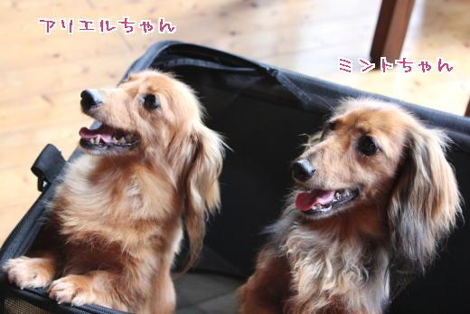 ミントちゃん&アリエルちゃん