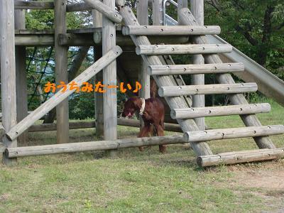 CIMG5620.jpg