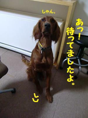 CIMG5640.jpg