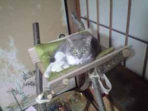 ぐり猫たわー