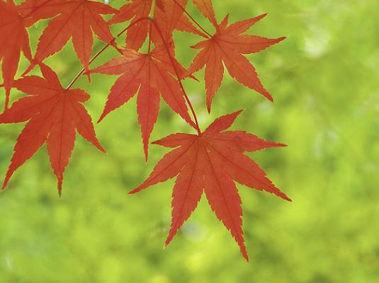 日本人に必要な祝福の心