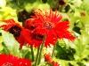 flower0015.jpg