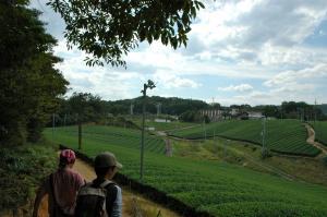 南山城茶畑