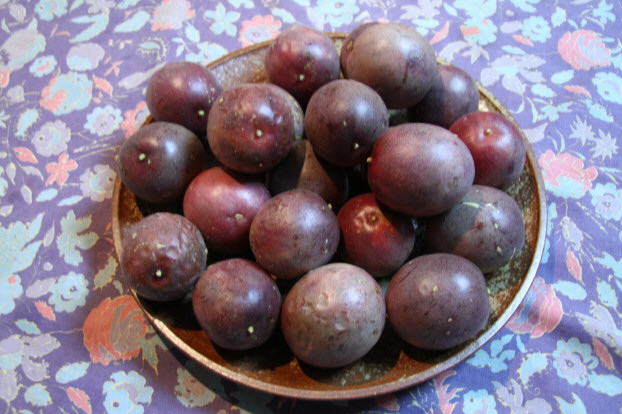 パッションフルーツ果実2