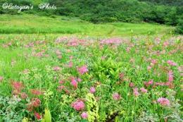 リフト下の花畑a