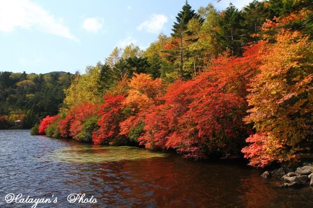 池の紅葉1a