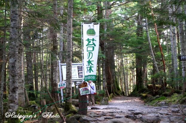 苔の森1a