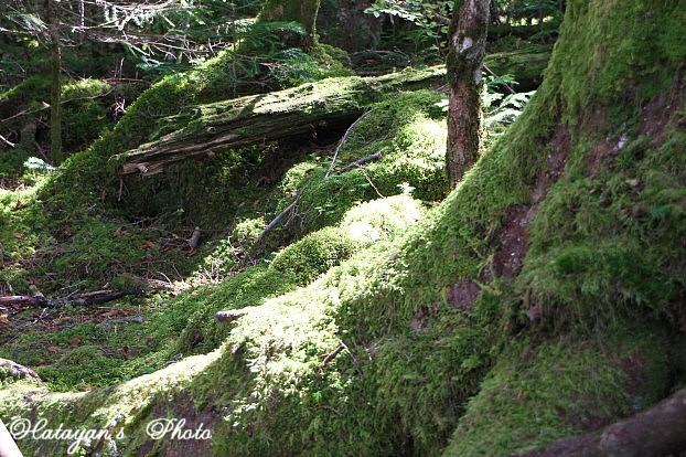 苔の森2a