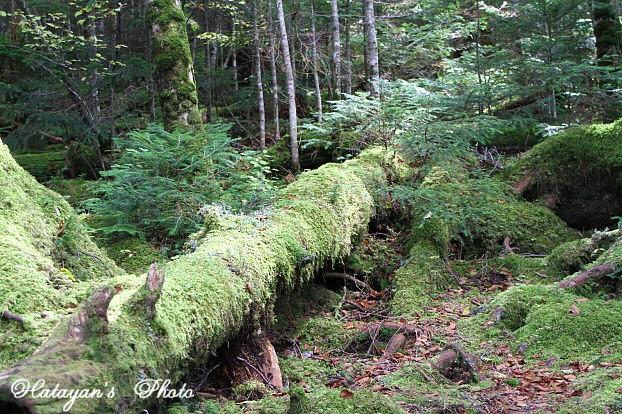 苔の森3a