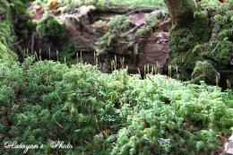 苔の森4a