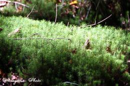 苔の森7a