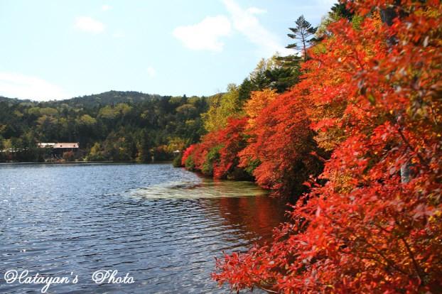 池の紅葉2a