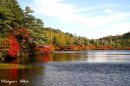 池の紅葉3a