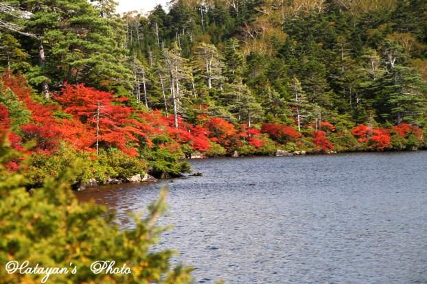 池の紅葉31a