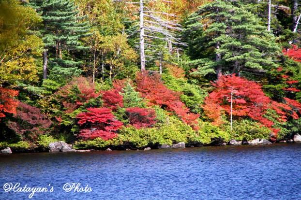 池の紅葉4a