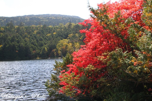 池の紅葉5a