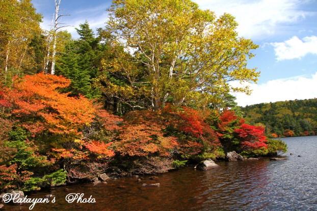 池の紅葉6a