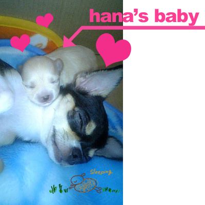 hanas baby