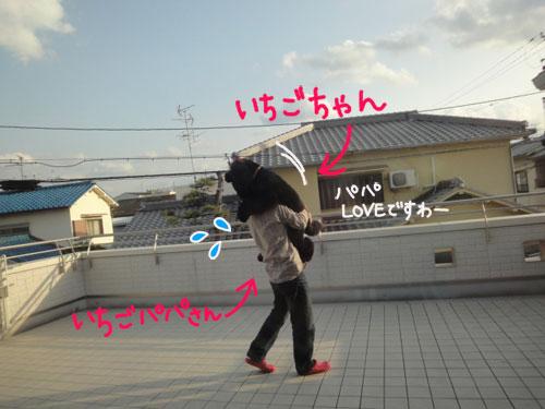 いちごちゃん6