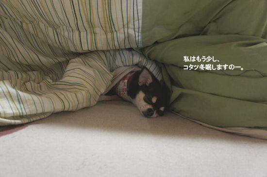 冬眠開け?4