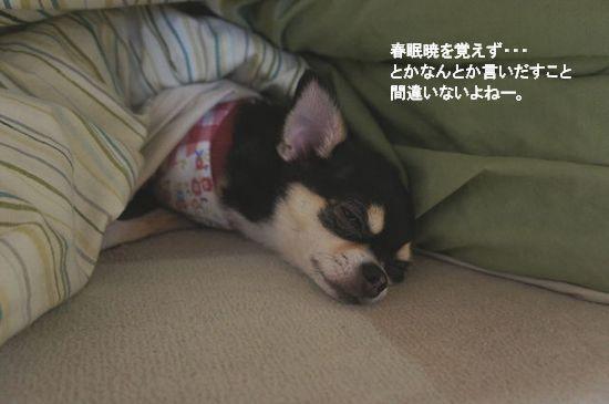 冬眠開け?3